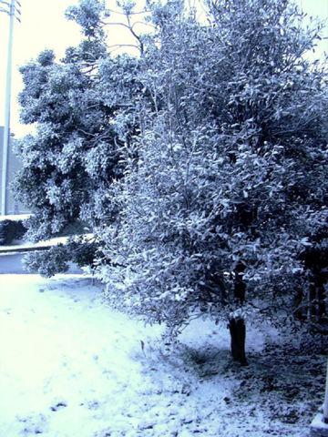 0329_雪景色.jpg